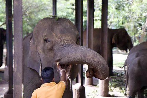 签证终于免费了!这辈子必去的斯里兰卡超强攻略,等您来打卡~