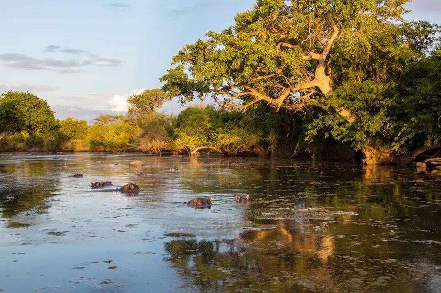 东非动物大迁徙旅行攻略及营地酒店推荐,看真人版狮子王